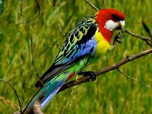 107426,xcitefun-pet-birds-4