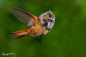 funny-bizarre-animal-blends-photo-manipulation-monkey-bird-7
