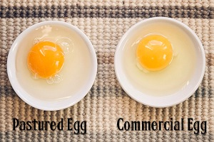 Pastured-versus-Commercial-Egg