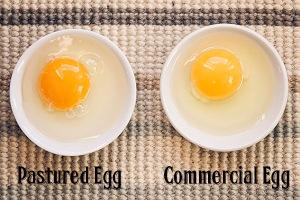 Pastured-versus-Commercial-Egg