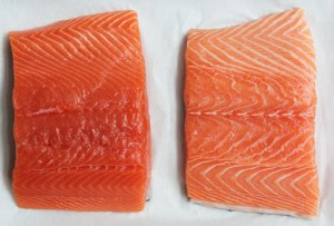 salmon-wild-vs-farmed_484