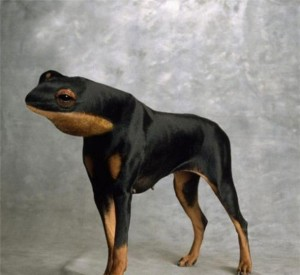 weird-animals-manipulation-25