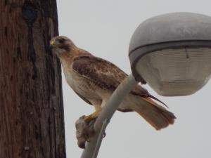 Enjoying a dove
